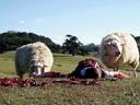 Black Sheep - Eli Kent , Nathan Meister
