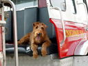 Firehouse Dog - Stryder , Steven Culp