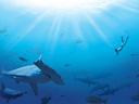 Haizivis - Paul Watson , Dr. Erich Ritter