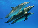 Dolphins and Whales 3D: Tribes of the Ocean movie - Picture 1