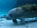 Dolphins and Whales 3D: Tribes of the Ocean movie - Picture 3