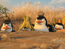 Madagascar 2: Escape 2 Africa movie - Picture 13