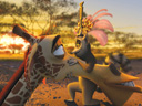 Madagascar 2: Escape 2 Africa movie - Picture 14