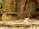 Beverly Hills Chihuahua movie - Picture 6