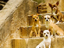 Beverly Hills Chihuahua movie - Picture 12