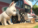 Bolt movie - Picture 17