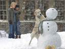Marley and Me movie - Picture 4