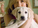 Marley and Me movie - Picture 15
