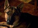Suņa dzīves jēga - Peggy Lipton , K.J. Apa
