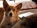 Suņa dzīves jēga - John Ortiz , Nicole LaPlaca