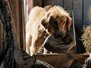 Suņa dzīves jēga -