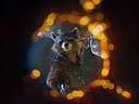 Galaktikas sargi: 2. daļa - Bradley Cooper , Michael Rooker