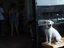 Suns viņu zina - Ana Flavia Gavlak , Maurice Compte
