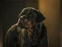 Suņu neiespējamā misija - Will Arnett , Stanley Tucci