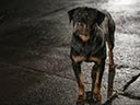 Suņu neiespējamā misija - Stanley Tucci , Natasha Lyonne