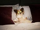 Suņu neiespējamā misija - Jordin Sparks , Delia Sheppard