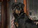 Suņu neiespējamā misija - Delia Sheppard , Andy Beckwith