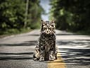 Pet Sematary movie - Picture 15