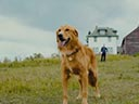 A Dog's Journey movie - Picture 1