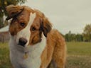 A Dog's Journey movie - Picture 8