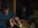 A Dog's Journey movie - Picture 9